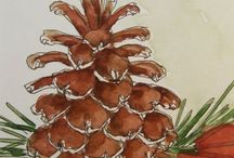 48 - Conifères & Pommes de pin