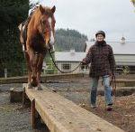 Horse playground