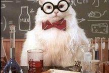 Science {chemistry}