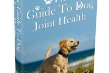 Dogs Joint Health / Are You Worried About Your Dog's Joint Health?
