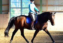 Hevoskuvia / Kuvia kauniista ratsastuksesta. Näin!