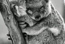 Cute wild animals