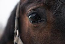 Paarden onderzoek