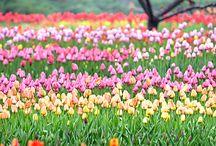 Цветы / Цветы полевые,комнатные ,