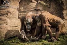 Ile aux primates