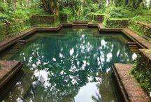 my nice pond