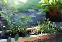Garden & farming