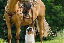 a ló és a kutya