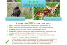 Outdoor Learning for Kids / by Candace Lindemann - Naturally Educational