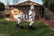 funny walking animals