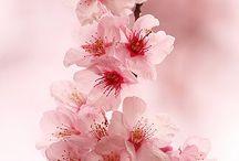 bloemen bomen