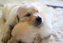 Hundebabys / Bilder von Hundebabys :*