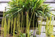 orquidea minuscula