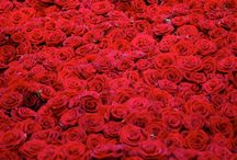 RED♥♥
