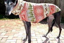 Greyhound Coats / Apparel for Greyhounds