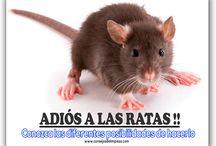 7 CONSEJOS INFALIBLES PARA EXTERMINAR LOS RATONES / Hay muchas maneras de deshacerse de las molestas plagas de ratones en casa, puede elegir la suya de nuestro listado.