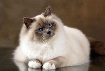 Chat chat toutou chatou