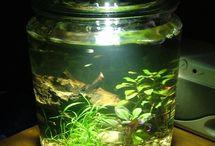 Amazing Succulents / Plants I love & want!