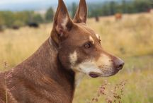 Our Dogs / Images of our dogs, of course!