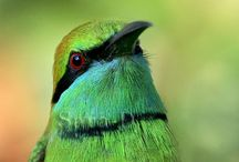 Beautiful Birds / by Petrina Kovacs
