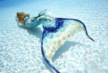 mermaid x