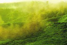 Découverte du thé / Tea discovery