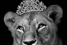 Leeuw vrouwen