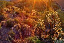 Arizona Mama / Pins from your favorite Arizona bloggers and contributors to Arizona Mama on TodaysMama.com
