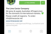 IG - The Lime Caviar Company