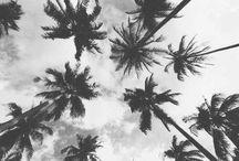Palm trees.
