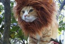 funny/amazing animal images
