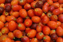 Marmelatlar