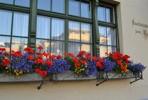 Containers and windowboxes