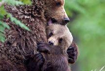 mares i fills