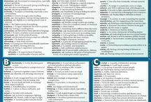 vocabulary for essays