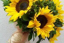 Kwiaty sezonowe - sierpień