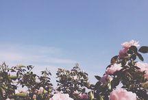 Blomster III