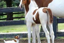 Horses,foals,ponies and donkeys
