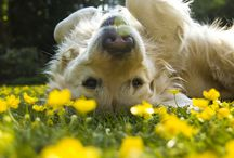 Playing In The Meadow
