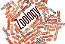 zoology / blog post http://nicolegalpern.net/post/171559052236/zoologist-source