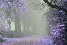 a midsummer night's dream / Wedding inspiration based on A Midsummer Night's Dream