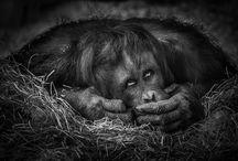 Ich glaub', ich werd' zum Affen
