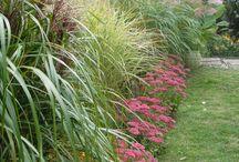 trawy / trawy ozdobne