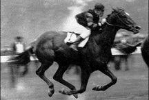 Berühmte Pferde