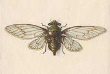 Peinture/ Porcelaine : Insectes