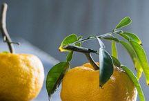 растения и плоды