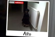 Pets with Rads Comp - Your Entries / You could win a Dyson Handheld Animal Vacuum worth over £200 by submitting a photo of your pet with a radiator or towel rail!  See how to enter at http://bit.ly/1biHJHl (Feel free to tag yourselves!)