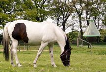 Horse protection / H- trap - Horse flies are a constant nuisance, particularly during the period May – October in the northern hemisphere. Since they feed on blood, their aggressive stings are very painful not only for animals, such as horses and cows, but also for humans.