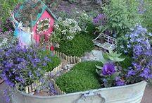 Miniature / Fairy Gardens