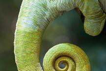 Spirals Curls & Swirls